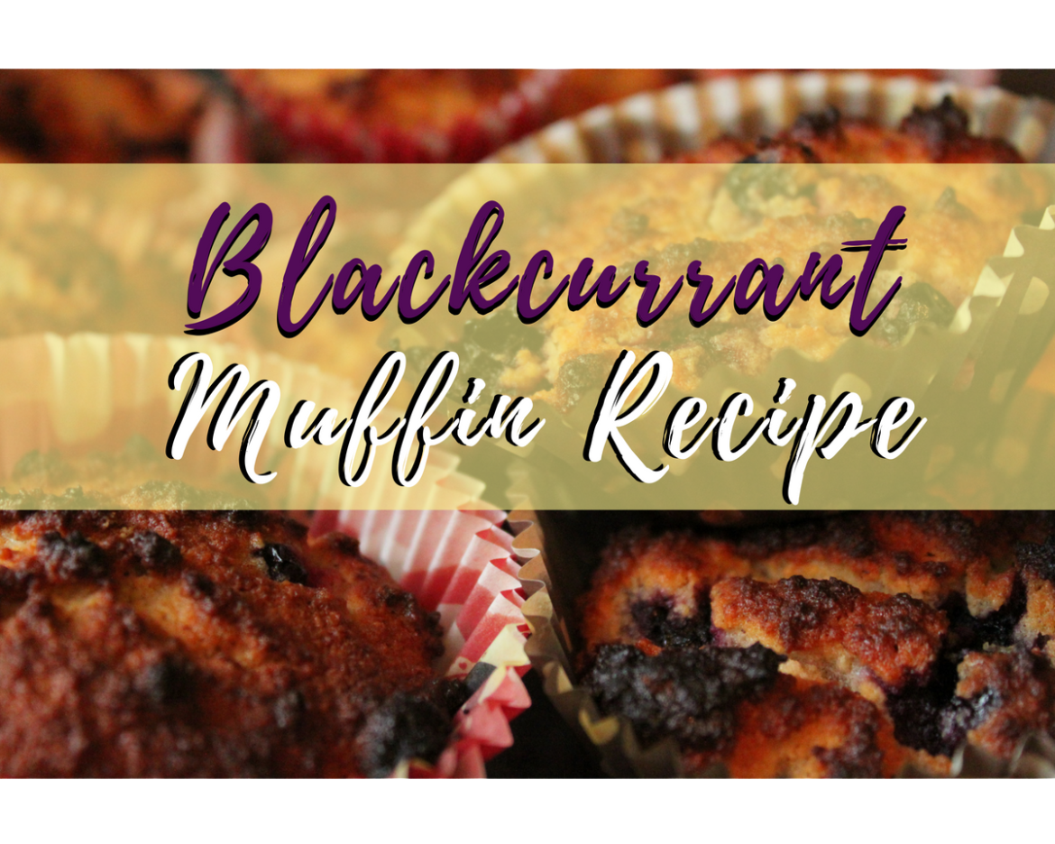 blackcurrant-muffin-recipe.png